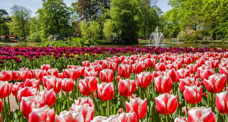 キューケンホフ公園(写真提供:キューケンホフ公園)